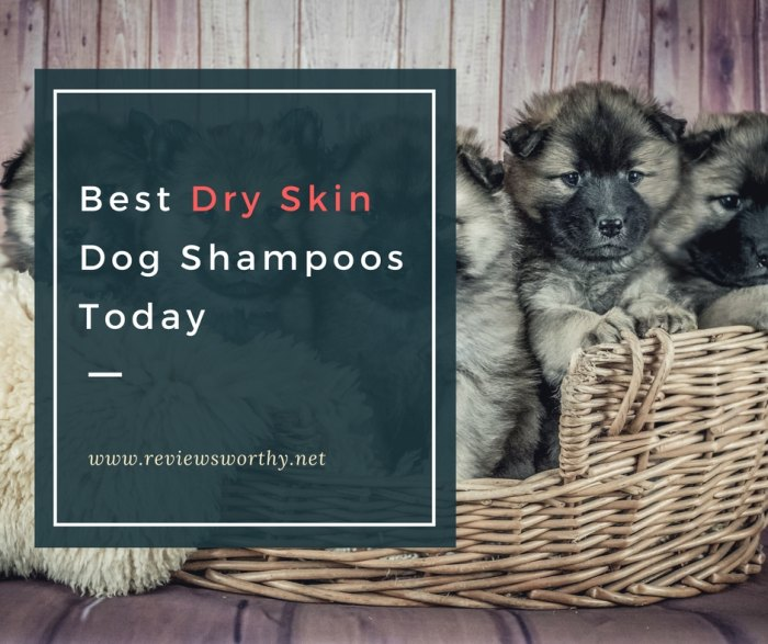 Best Dry Skin Dog Shampoos Today
