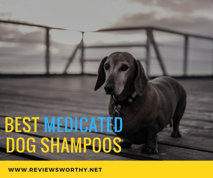 Best Medicated Dog Shampoos