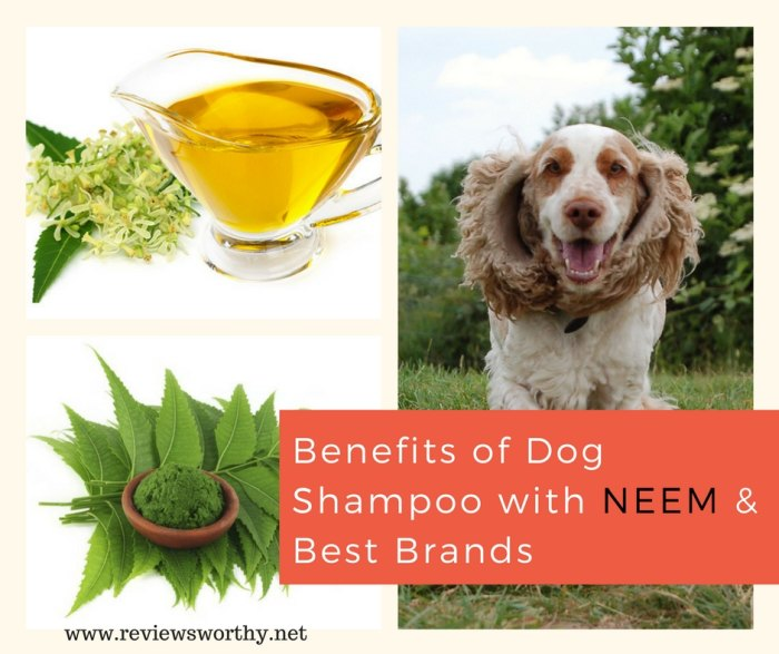Benefits of Dog Shampoo with Neem Best Brands