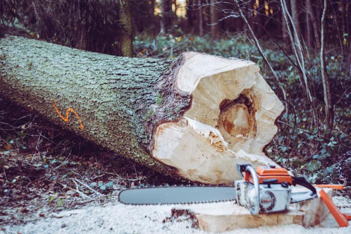 What Can You Cut with a Small Chainsaw